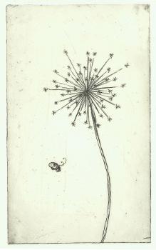 Dandelion - Rachel Bright