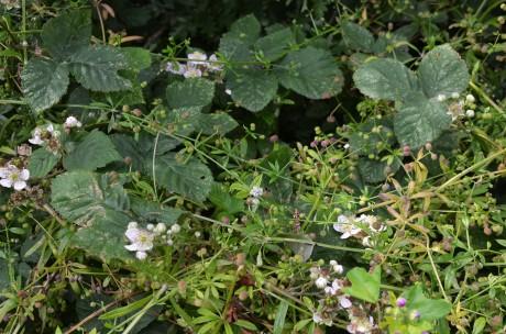 Tangled Wild Flowers