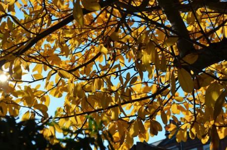 memories-of-autumn