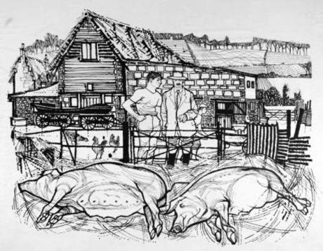 The Piggery Illustration